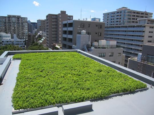 枯れるセダムの屋上緑化はもう古い!!
