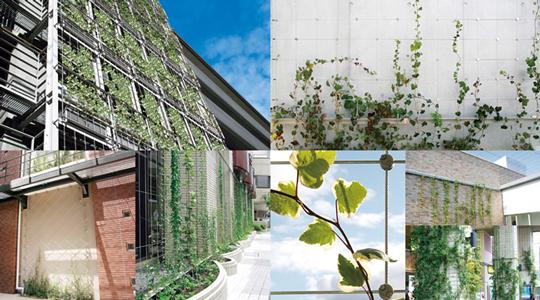 ワイヤーブラケットシステムで都市緑化を壁面から美しくサポート