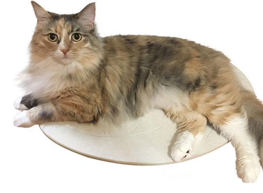 猫専用の珪藻土マット『猫・ネコろぶマット』をご紹介!
