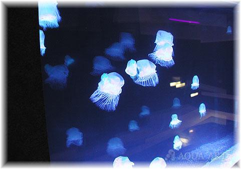 アクア・アートは水と光と空気をモチーフにした空間演出に特化しています! 製品紹介