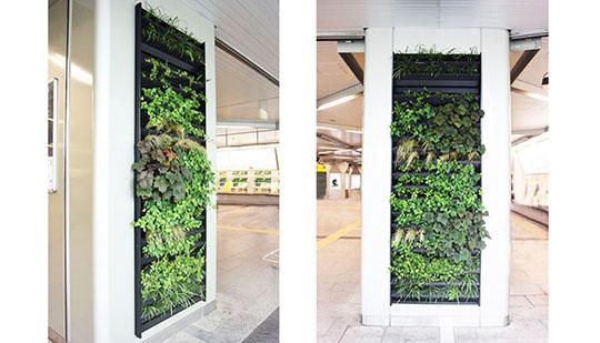 夏のヒートアイランド対策に!壁面緑化