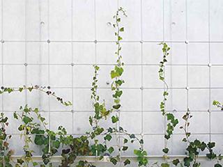 壁面緑化ワイヤーブラケットシステム WB-L