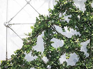 壁面緑化ワイヤーブラケットシステム WB-M