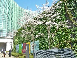 つる植物を用いた壁面緑化工法ヘデラ登ハンシステム「ツルパワーパネル」