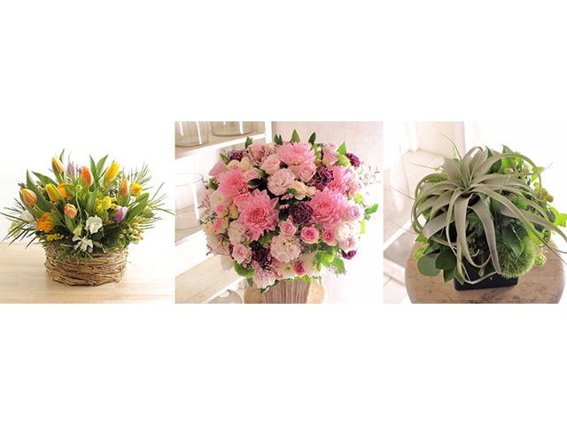 祝い花・祝い鉢