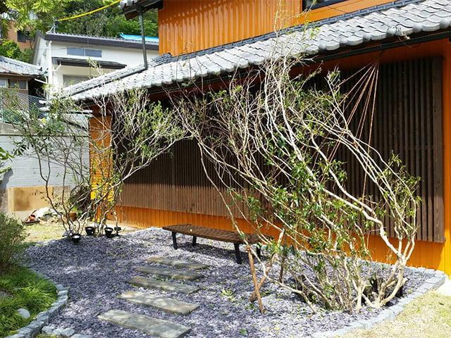 サスティナブルな植木お茶の木(オチャノキ)