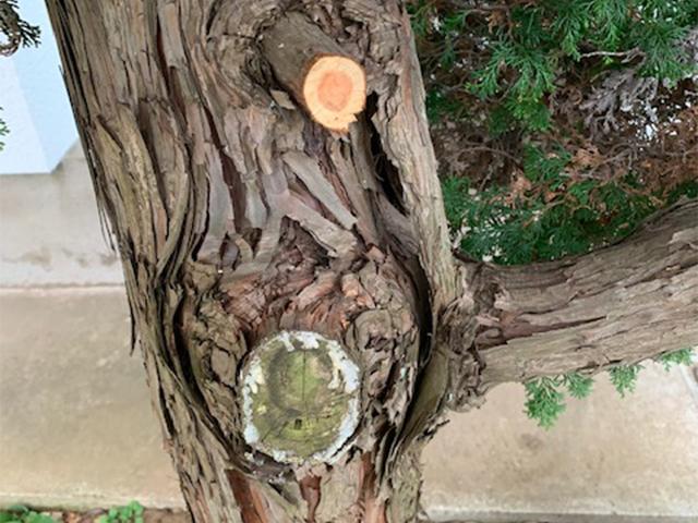 樹木を守る癒合剤