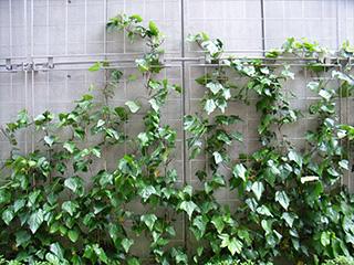 SR-F メッシュ式 壁面緑化