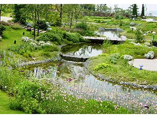 造園緑化用植物苗【グランドカバー】