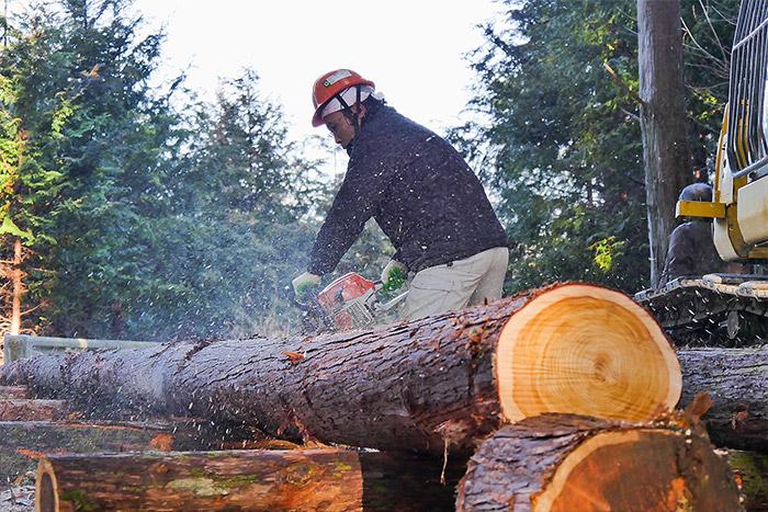 木の国「和歌山」の山林で育った、良質な紀州桧・杉